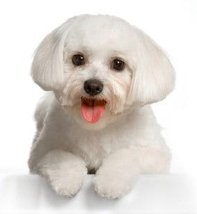 Dog Skin and Hair