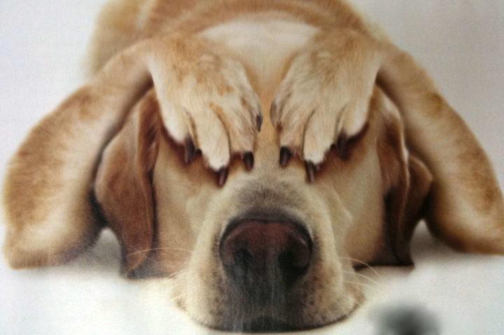Canine Obesity