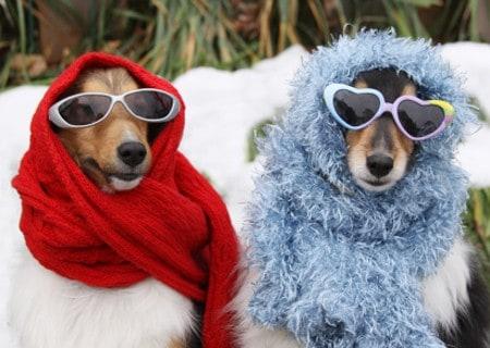 Wintertime Hazards Dogs