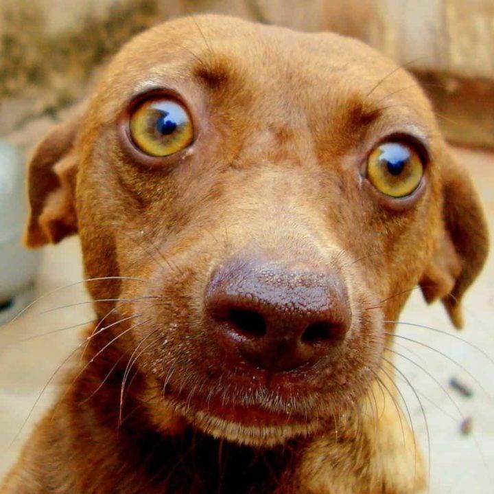 Dog Constipation