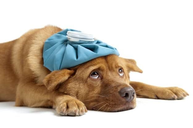 dog diarrhea