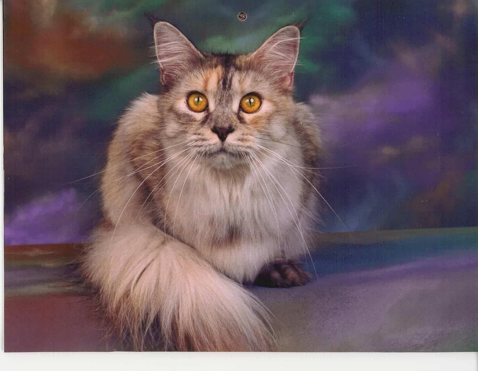 Samantha the Cat