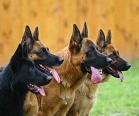 Veterinary Pet Foods