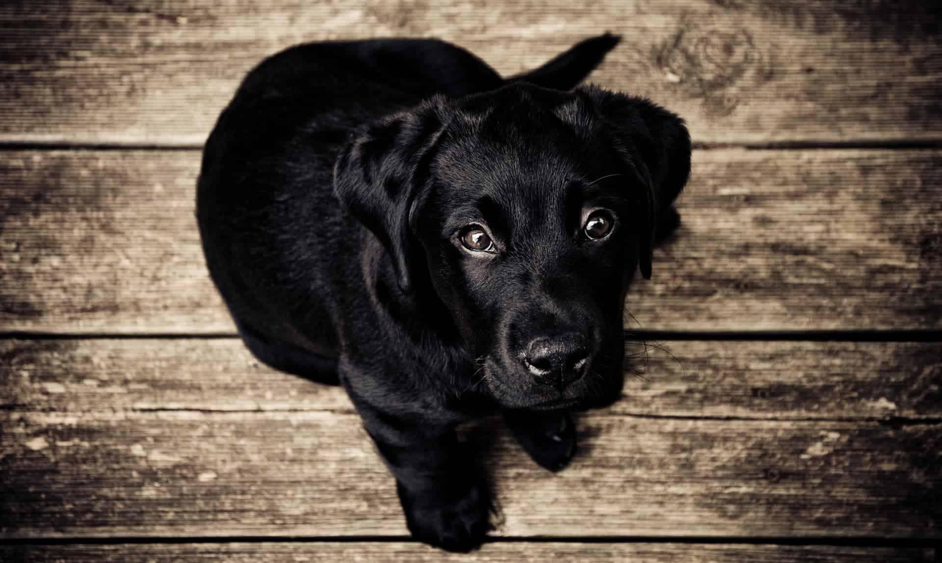 Shocked TV Anchor Bitten by Dog