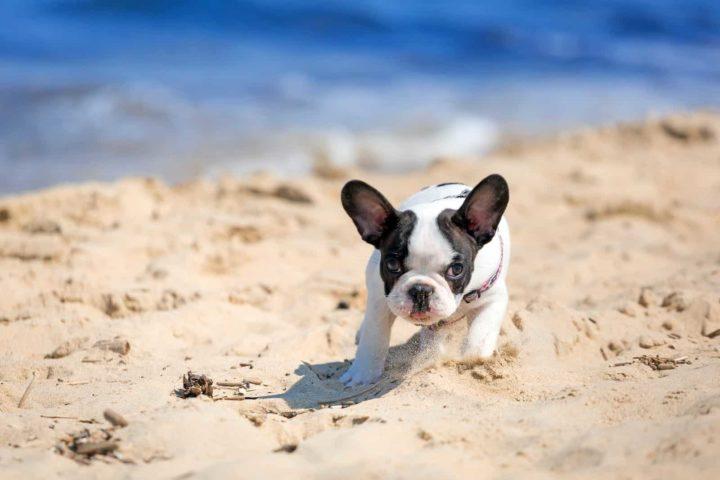 Dogs' Born Blind Regain Vision
