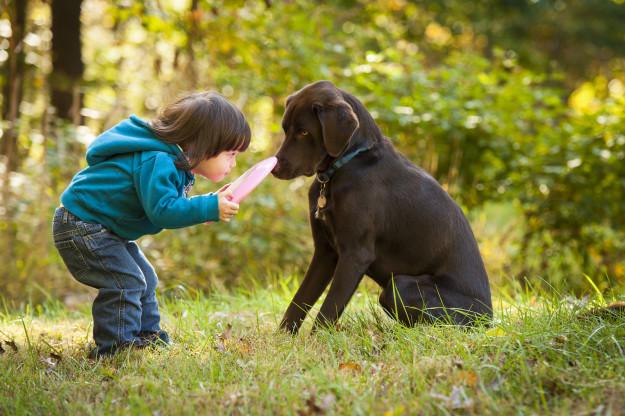 Pet Antioxidants Promote Pet Health in Dogs & Cat's