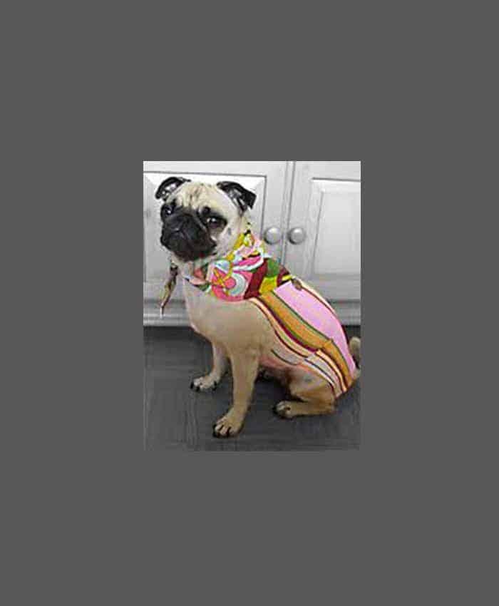 Dog Second Skins (lycra bodies) by Pet Snobs