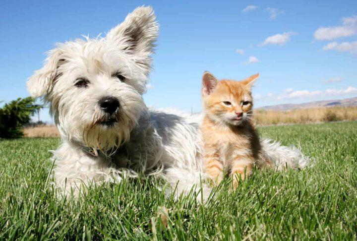 Senior Cat Care - Senior Cat Golden Years