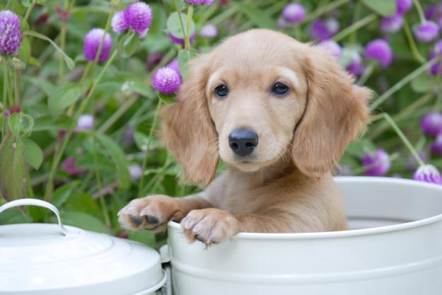 Grow Your Own Herbal Healing Garden