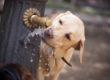 Pet Heatstroke Prevention Tips