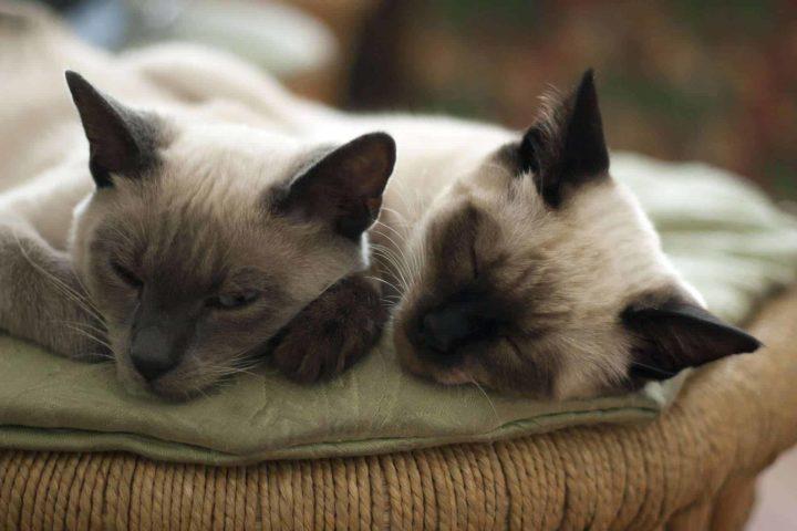 Bird Flu Outbreak Affects Cats