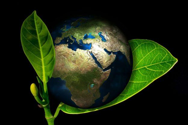 Your Pet's Carbon Footprint