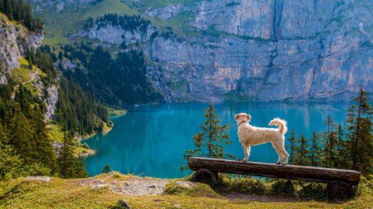 Dr Osborne - Help your Pet Beat the Heat - FOX & Friends