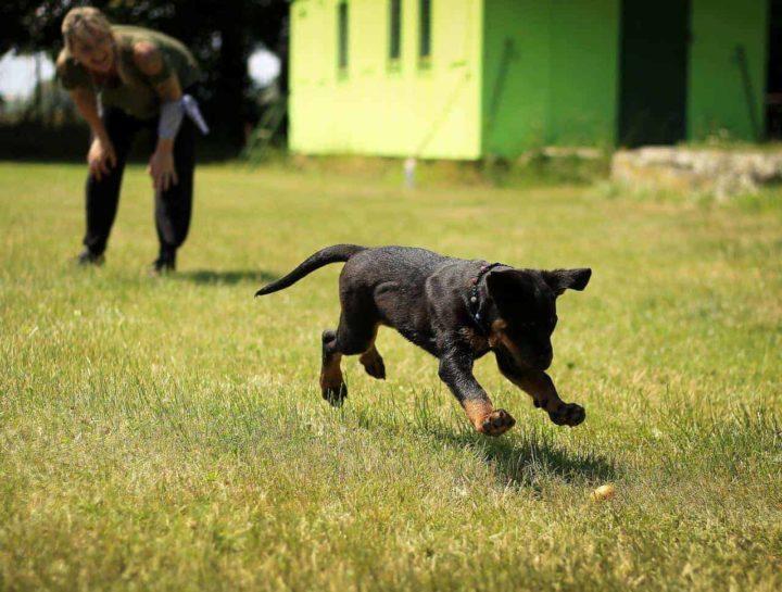 Puppy Potty Training: Do's & Don'ts