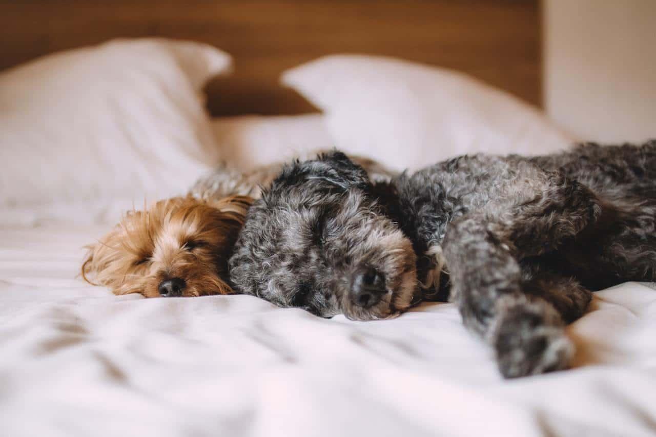 Alert Orijen Acana Dog Food Euthanasia Solution
