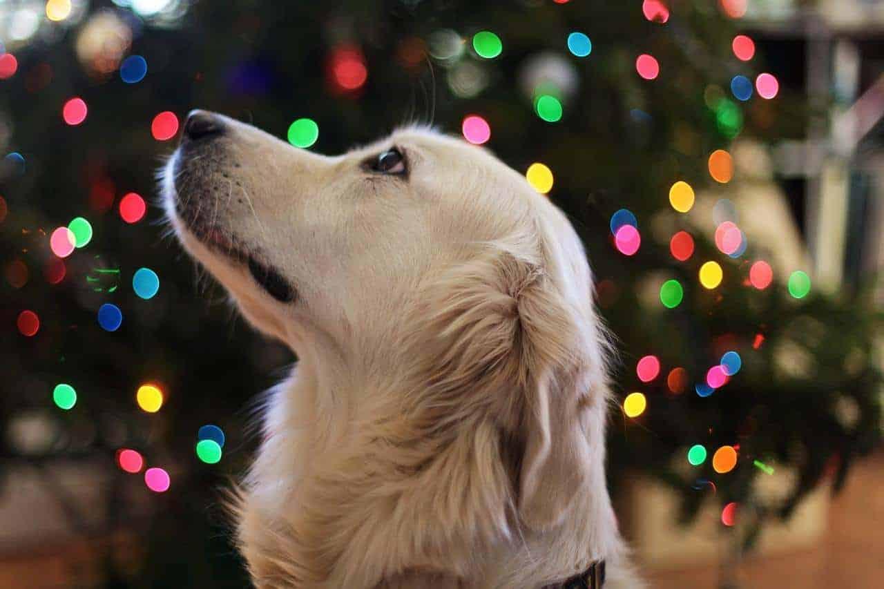 Pet Holiday Decorating Tips