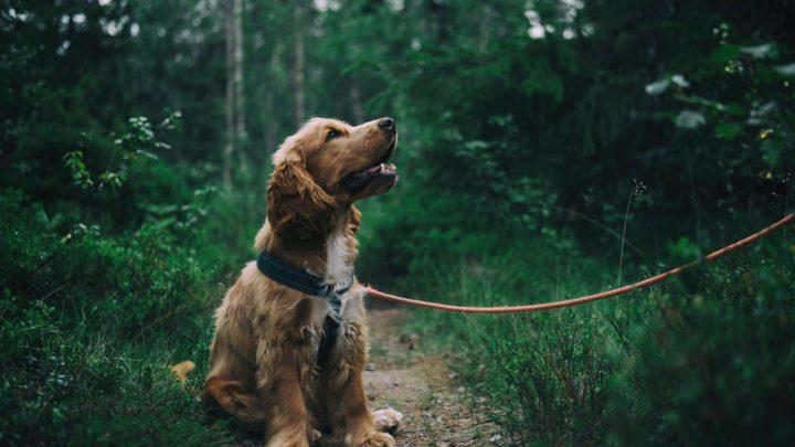 Ticks & Tick Diseases Ticks Threaten Dogs & People