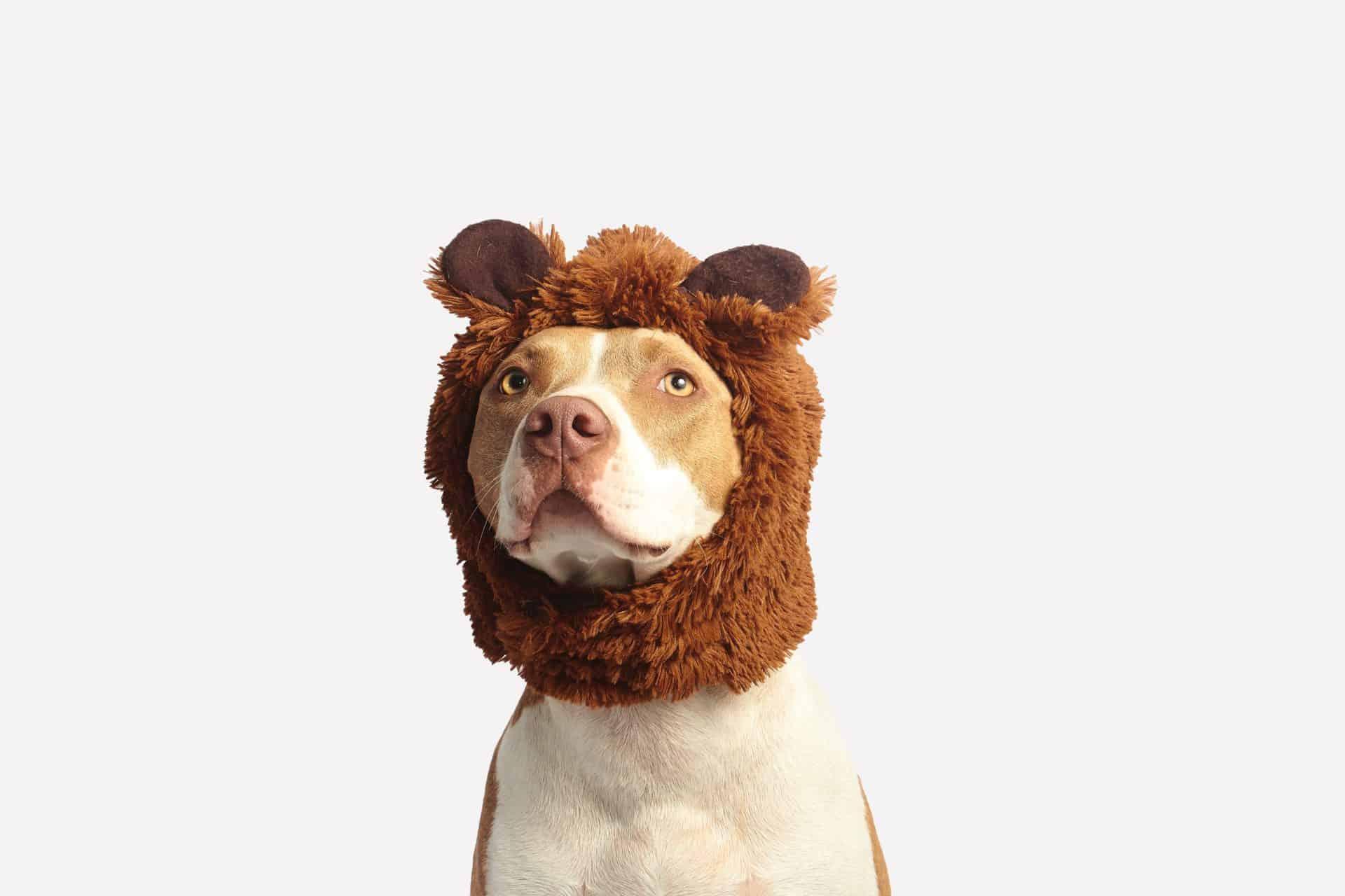 Canine Hair Care
