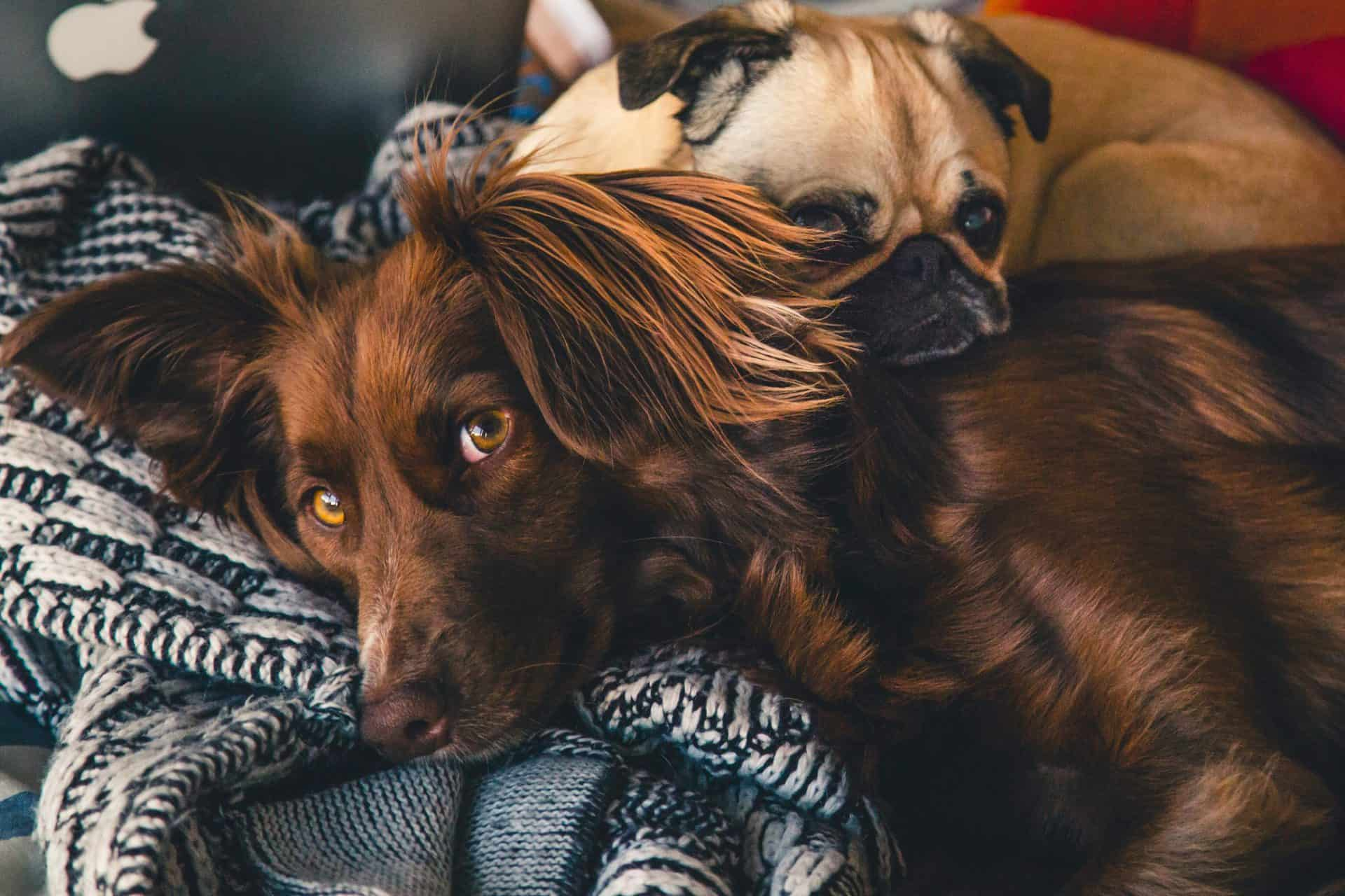 6 Reasons Your Dog May Need A Supplement