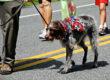 Memorial Day Pet Travel Tips