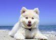 Pets Can't Sweat - Pet Heat Stroke is No Joke